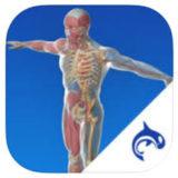 Orca Health App Logo