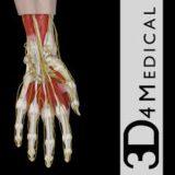 Hand and Wrist Pro 3 App Logo